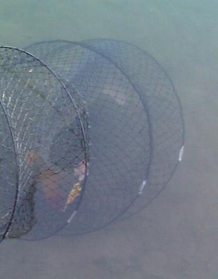 Нажмите на изображение для увеличения Название: Рыба.jpg Просмотров: 368 Размер:74.0 Кб ID:3