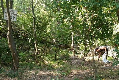 Нажмите на изображение для увеличения Название: Уборка мусора в лесополосе.jpg Просмотров: 65 Размер:95.0 Кб ID:267